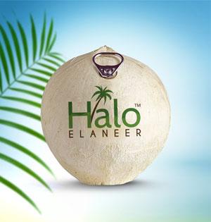 Halo-Elaneer
